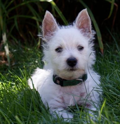 Springfield Dog Kennels